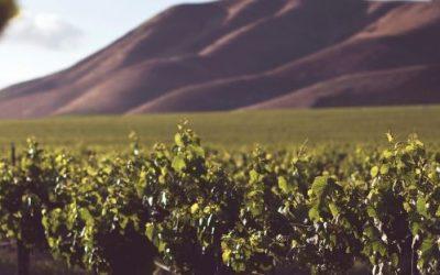 Een aantal leuke wijnweetjes op een rijtje