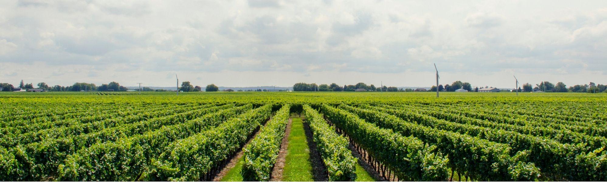webshop afbeelding vini vino